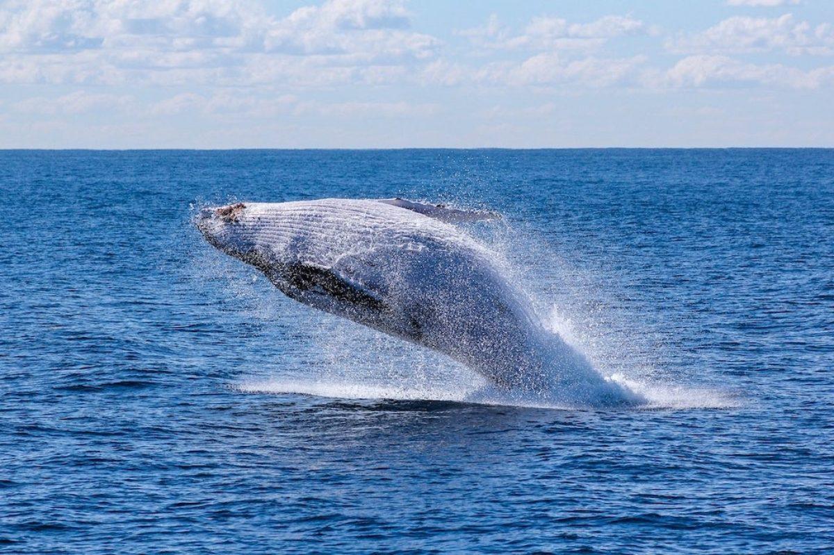 How Promoting Wildlife Tourism Helps Endangered Species