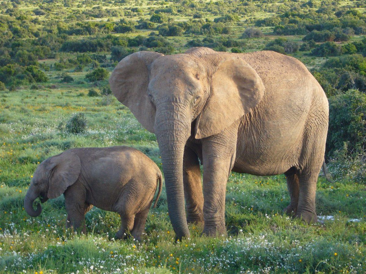 Tropical Tours & Safaris, Botswana